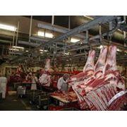мясопереработка предприятия мясопереработки цех мясопереработки фото