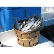 Продаем рыбу морску рыбу Предоставляем услуги: переработки рыбы фото
