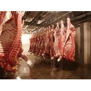 Хранение мясной продукции хранение мяса хранение охлажденного мяса хранение замороженного мяса температура хранения мяса сроки и условия хранения мяса фото
