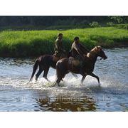 Езда на лошадях фото