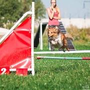 Дрессировка, воспитание и перевоспитание собак. фото