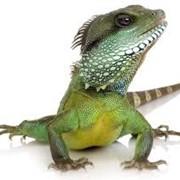 Лечение экзотических животных фото