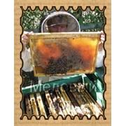 Продажа пчёл в Краснодаре фото