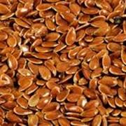 Масличные культуры, Лен масличный оптом по Низким ценам от производителя. Гарантия фото