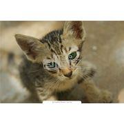 Прививки кошкам и собакам фото