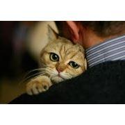 Ультразвуковая диагностика животных , Донецк фото
