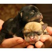 Акушерская ветеринарная помощь г.Николаев фото