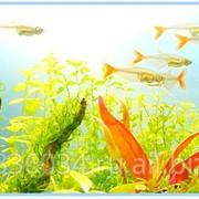 Рыбки аквариумные - дискусы и меченосцы фото