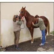Ветеринарные мероприятия при содержании лошадей фото