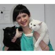 Ветеринарные услуги Киев фото