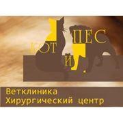 Ветеринарная клиника Запорожье. Вакцинация стерилизация кастрация хирургия родовспоможение кошек и собак. Чистка зубов стрижка животных фото