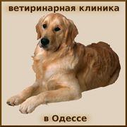 Терапия ветеринарная Консультация постановка диагноза животным в Одессе фото