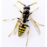 Уничтожение тараканов крыс мышей и насекомых ос фото