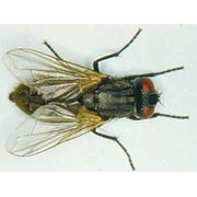 Уничтожение тараканов крыс мышей и насекомых мух фото