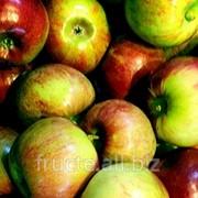 Яблоки Кортланд , Молдова фото