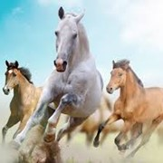 Оценка лошадей фото