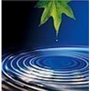Синтетическое моющее средство типа «Лотос» фото