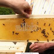 Мед пчелиный Казахстан фото