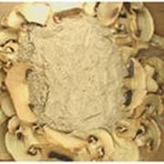 Грибы шампиньоны порошок фото