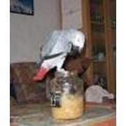 Диагностика и лечение птиц фото