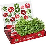Розы Живая открытка Happy Plant наборы для выращивания фото