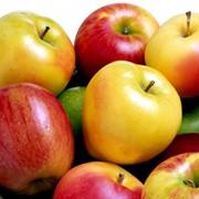 Яблоки, яблоки из Польши фото