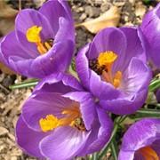 Классический массаж «Дыхание весны» фото