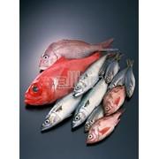 Рыба морская свежемороженая в ассортименте фото