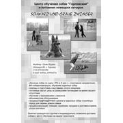 """Центр обучения собак """"Горловский"""" фото"""
