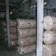 Готовые грибные блоки вешенки прошедшие инкубацию фото