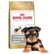 Сухой корм для щенков Royal Canin Yorkshire Terrier 29 Junior 0,5 кг фото