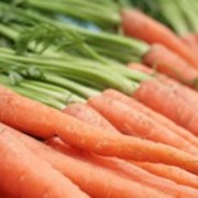 Морковь свежая, продажа, Белая Церковь, Украина фото