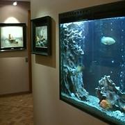 Обслуживание аквариумов. фото
