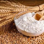 Ищем поставщиков пшеничной муки фото