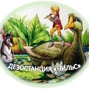 Уничтожение клопов в Алматы фото