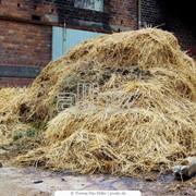 Удобрения органические конный навоз оптом Киев фото