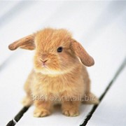 Комбикорм полнорационный для кроликов до 2 месяцев фото
