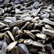 Переработка семян подсолнечника днепропетровск фото