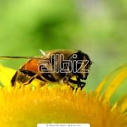 Пчелы в пакетах, пчелопакеты фото