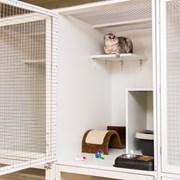 Услуги по уходу и содержанию за животными(кошки) фото