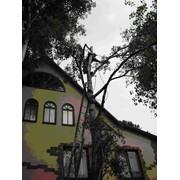Удаление аварийных деревьев,Кронирование, удаление деревьев фото