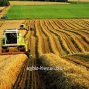 Прибыльное сельхозпредприятие с землей 6200 га фото