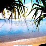 Экзотические туры на Бали фото