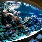 Услуги по ремонту стеклянных крупногабаритных аквариумов фото