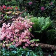 Уход за декоративными растениями фото