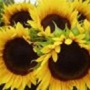 Семена Подсолнечника Бонд фото