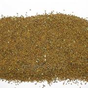 Рыжик посевной (семена) 50г фото