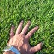 Комплексный анализ почвы фото