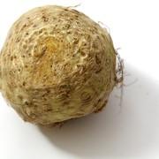 Сельдерей корень фото