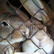Животные и зоотовары. Зоотовары. Клетки для животных. Клетки для кроликов фото
